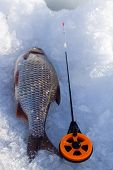 Roach And Ice  Fishing