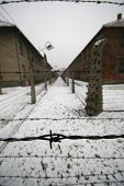 Barb wire in a WWII german prisoner camp