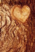 Forest brown wooden background. Texture forest wooden tree bark with sign of the heart. Love in natu