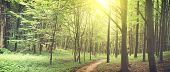 Beautiful nature at morning in the misty spring forest with sun rays