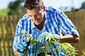 handsome young man pruning a plant in home garden
