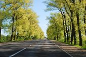 Summer Day And Road With Trees At Side