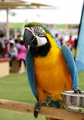 A beautiful macaw with food container
