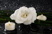 gardenia flower and candle with bamboo grove �¢�?�?wet background
