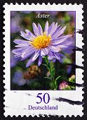 Postage Stamp Germany 2005 Aster, Flowering Plant