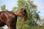 Brown Horse Swinging Its Tail