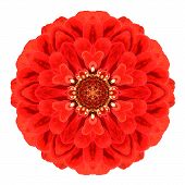 Red Kaleidoscopic Dahlia Flower Mandala Isolated On White