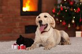 Family pets receiving gifts for Christmas - dog a kitten with small presents