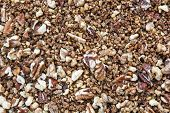 Background Of Cracked Pecans And Walnuts With Caramelized Brown Sugar