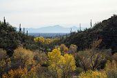 Tucson Landscape