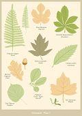 Botanical plate 1