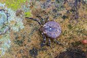 Parasite Tick On Ground