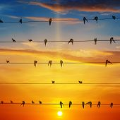 foto of sun perch  - flock of birds on a background of sunrise - JPG