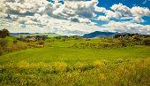 Idyllic Green Meadow