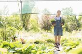 Full-length of gardener looking away while holding potted plants at greenhouse