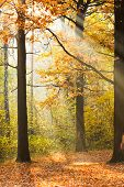 Sun Rays Lit Glade In Autumn Forest