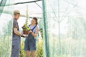 Male and female gardeners discussing over potted plant at greenhouse