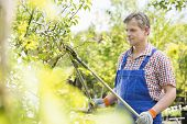 picture of tree trim  - Gardener trimming tree branches at plant nursery - JPG