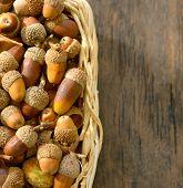 basket full of acorns on wooden table