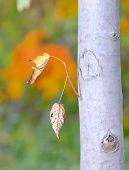leaves isolated in autumn forest