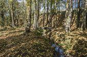 autumn in sariguren