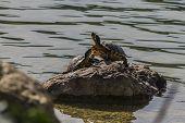 beautiful the turtle
