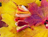 Colors Of Autumn, Multicolor Yarns Looks Like Autumn Leaves
