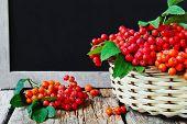 Ripe Red Rowan Branch In Basket