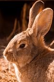 foto of wild-rabbit  - Close up shot of a Rabbit in the wild - JPG