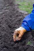 Planting Of Garlic