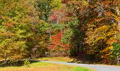Road framed by colorful autumn trees in the dense thicket.