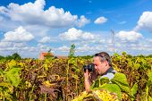 Photographer In A Withered Sunflowers Field