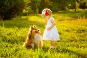 image of sheltie  - Little girl and dog breed sheltie playing outdoors on a sunny day