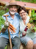 Senior couple with harvested carrots and beetroots
