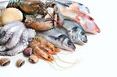stock photo of scallops  - Fresh catch of fish and other seafood - JPG