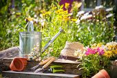 stock photo of horticulture  - Gardening tools and a straw hat on the grass in the garden - JPG