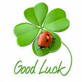 pic of four leaf clover  - Lucky symbols - JPG