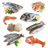 stock photo of shrimp  - fish collection isolated on the white background - JPG