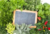 Fresh kitchen herbs with a vintage board