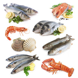 stock photo of shell-fishes  - fish collection isolated on the white background - JPG