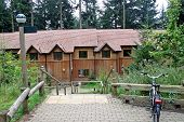 picture of redwood forest  - Houses made of wood in a forest  - JPG