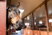 image of stable horse  - Head of horse looking over the stable doors - JPG
