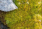image of vegetation  - macro picture of vegetation background grass moss natural - JPG