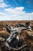 foto of boggy  - old petrified wood in a Irish peat bog landscape - JPG