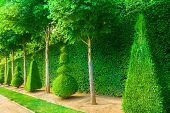 pic of chateau  - Conical hedges lines from Versailles Chateau - JPG