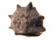 picture of snail-shell  - This weathered snail shell brings back memories - JPG