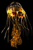 foto of predator  - The jellyfish is a predator of the seas which stings its prey with poisonous tentacles - JPG