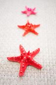 foto of echinoderms  - red sea stars or starfish, selective focus