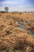 stock photo of dry grass  - Dry grasses on flood - JPG