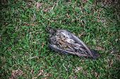 image of grass bird  - Remains of bird on field of green grass - JPG